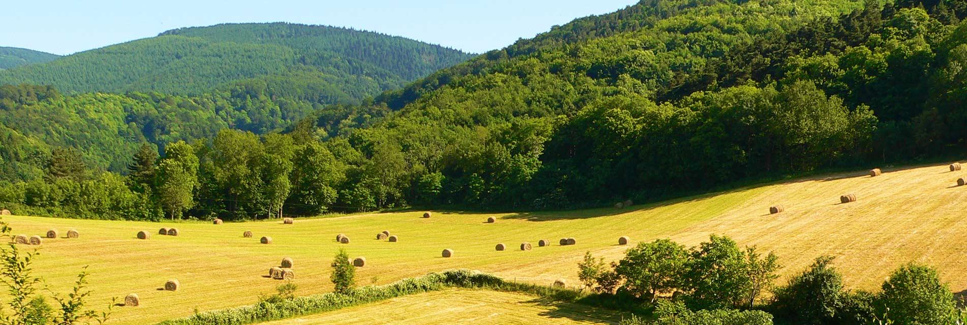 Le pays d'Autan et la Montagne Noire – Tarn – Occitanie