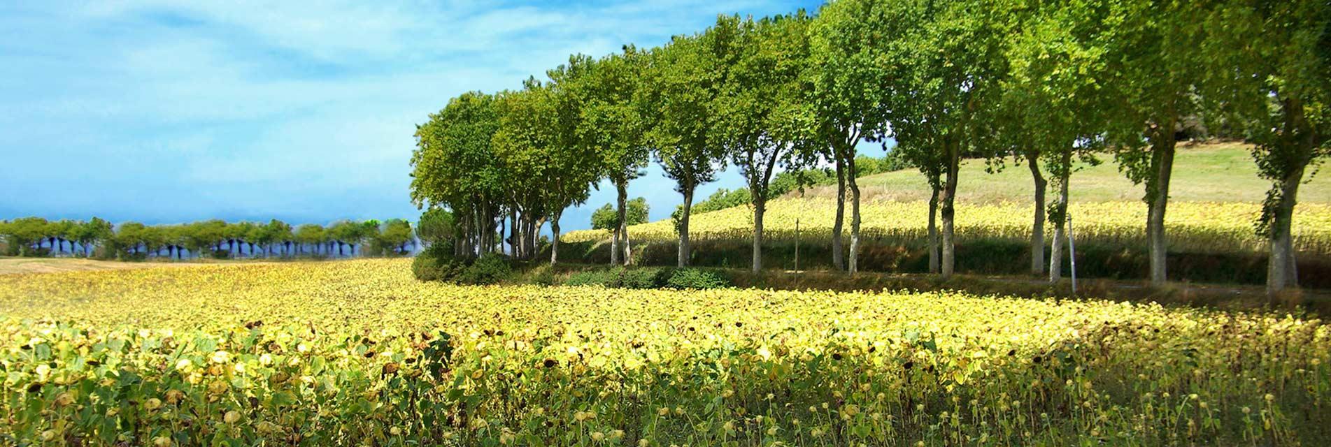 Le Pays de Cocagne dans le Tarn en Occitanie