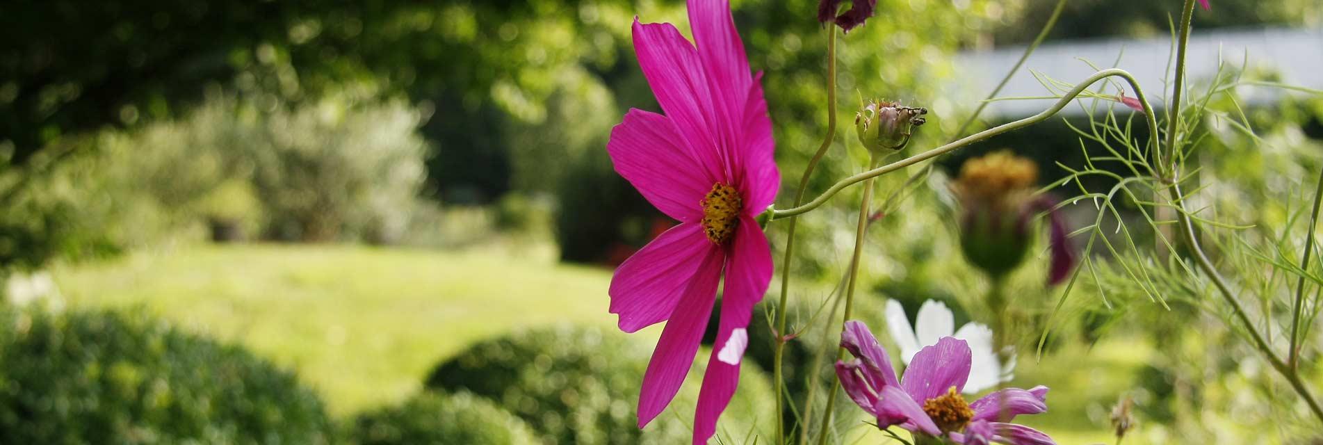 Vacances au jardin dans le Tarn Occitanie