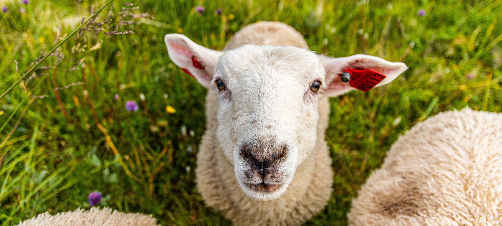 Gites de France - Le Tarn vous veut du bien avec les séjours à la ferme