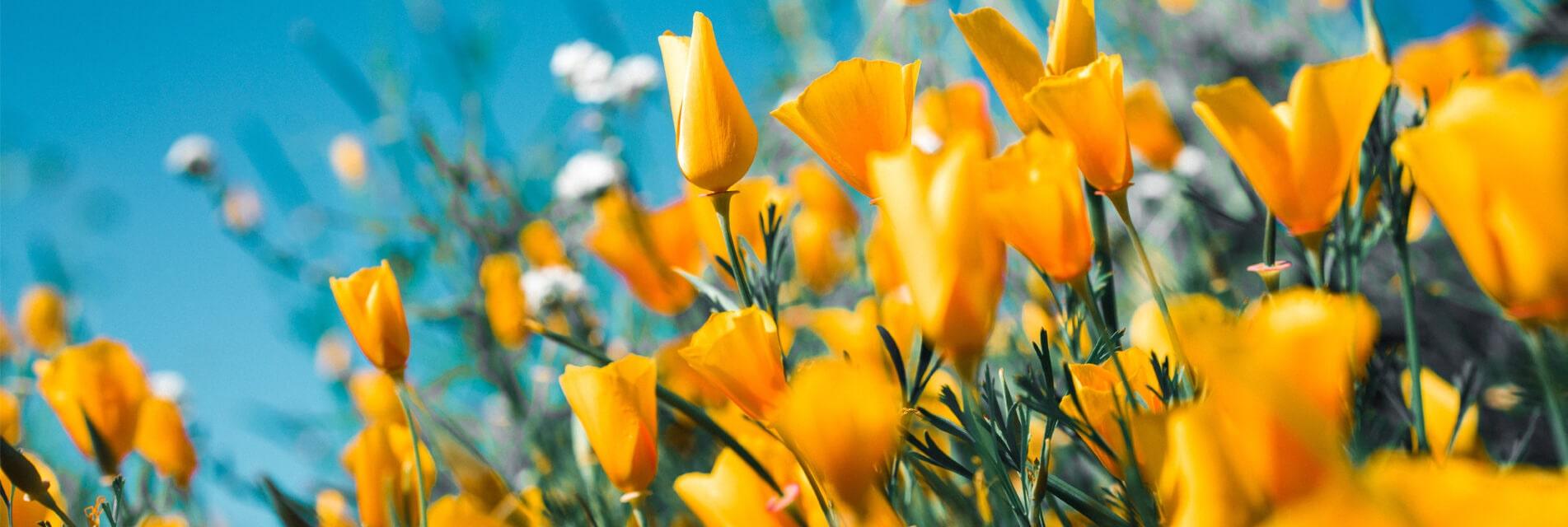 Réservez vos vacances de printemps dans le Tarn en Occitanie