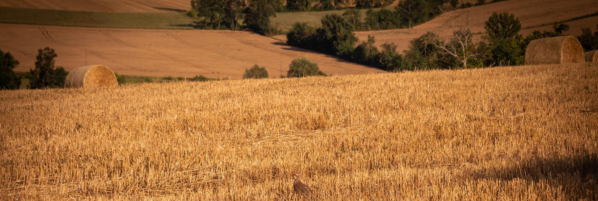 Vacances en campagne Tarn Occitanie