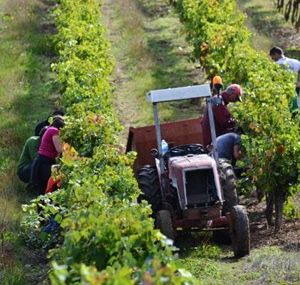 Expériences à vivre et offrir au Vignoble de Gaillac, Tarn