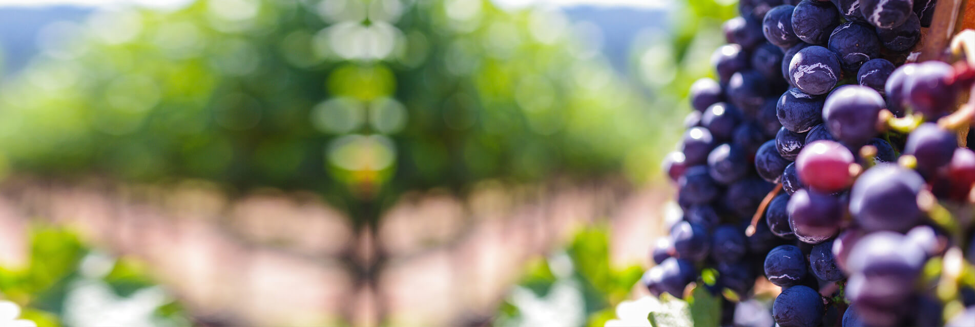 Nos Séjours et week-ends vin et œnologie au vignoble de Gaillac dans le Tarn en Occitanie