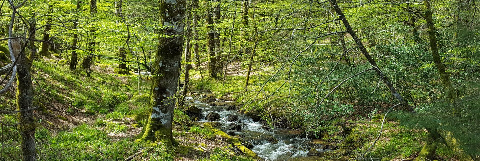 Séjourner à Lacaune dans le Tarn en Occitanie