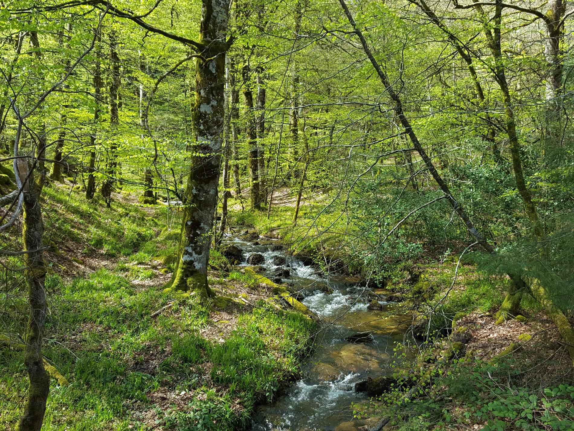 Vacances et week-ends à Lacaune Tarn Occitanie